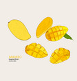 set of mangoeshand draw sketch vector image vector image