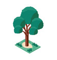 tree plant mini isometric icon vector image vector image