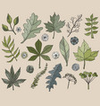 hand drawn leafs and plants vector image vector image