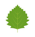 leaf nature plant simple cartoon flat style vector image