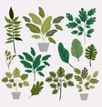 natural leafs and houseplant pattern background vector image vector image