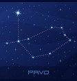 constellation pavo peacock night star sky vector image vector image