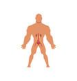 human urinary system anatomy of human body vector image