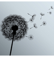 Flower dandelion on gray background vector image