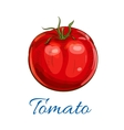 Fresh ripe red tomato with leaves sketch icon vector image
