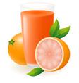 grapefruit juice vector image
