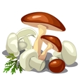 Forest mushrooms and champignons isolated vector image vector image