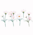 big collection white and pink cosmos flowers vector image vector image