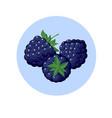blackberry berries in blue circle vector image