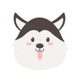 cute dog siberian head on white background vector image vector image