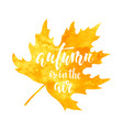 autumn is in air on yellow watercolor maple vector image vector image