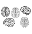 Black and white cartoon human brains vector image vector image