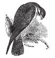 falcon vintage vector image vector image