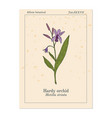 hardy or hyacinth orchid bletilla striata vector image vector image