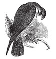 the falcon vintage vector image vector image