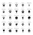 Animal track prints set vector image vector image