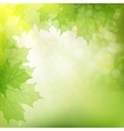 Background of green leaves EPS 10 vector image vector image