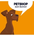 pet shop brown doggy and bubble speech design vector image