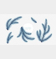 realistic blue christmas tree branches isolated on vector image vector image