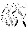 set feathers with birds collection stylized vector image