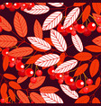 the leaves and berries of mountain ash seamless vector image vector image