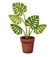 plant in pot indoor and outdoor landscape garden vector image vector image