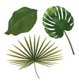 tropical plant leaf set realistic palm leaves vector image