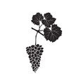 bunch of grapes on a branch with leaves isolated vector image