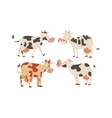 Cartoon cow characters vector image vector image