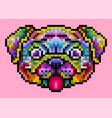 colorful cute pug isolated vector image