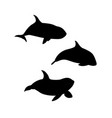 hand drawn killer whale set vector image vector image