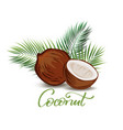 coconut and palm leaves vector image vector image