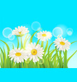fresh spring juicy chamomile flowers and green vector image