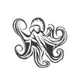 octopus silhouette on white vector image