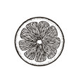 slice slice of lemon orange grapefruit lime vector image