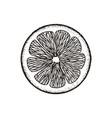 slice slice of lemon orange grapefruit lime vector image vector image