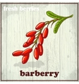 Hand drawing of barberry Fresh vector image vector image