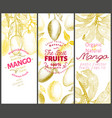 mango fruit banner set hand drawn fruit vector image
