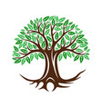 round tree icon with leaves and roots vector image