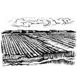 rural landscape agricultural crops vector image vector image
