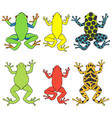 set color with tropical tree frog vector image