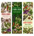 garden herbs and farm spice market sketch banners vector image vector image