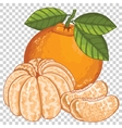 Mandarin Isolated vector image vector image