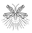 modern firefly tattoo design image vector image vector image