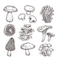 sketch mushroom nature ingredients tasty vector image vector image