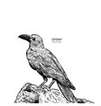 crow hand drawn high quality vector image vector image