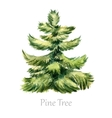 Watercolor christmas tree vector image vector image