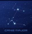 constellation canis major great dog night star vector image vector image