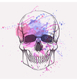 human skull with watercolor splash vector image vector image