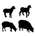 sheeps silhouette set vector image vector image